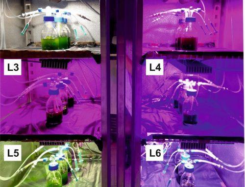 Wpływ składu spektralnego światła na poziomie komórkowym na przykładzie jednokomórkowych glonów cz. 2
