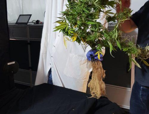 Plantalux & Hortica – выращивание конопли в Израиле